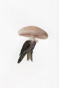 http://thinkspacegallery.com/2008/project/API/show/amyross_owlshroom.jpg
