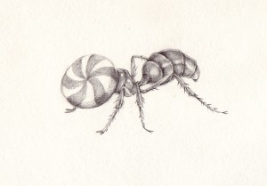 http://thinkspacegallery.com/2010/05/show/meatseeker-ant.jpg